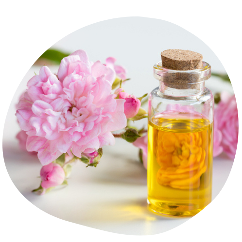Biovancia Santé - BVA   CAA   rosehip