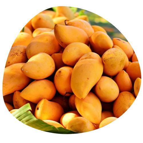 Nutrilim 24 : mangue