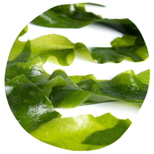Nutrilim 24 : wakame