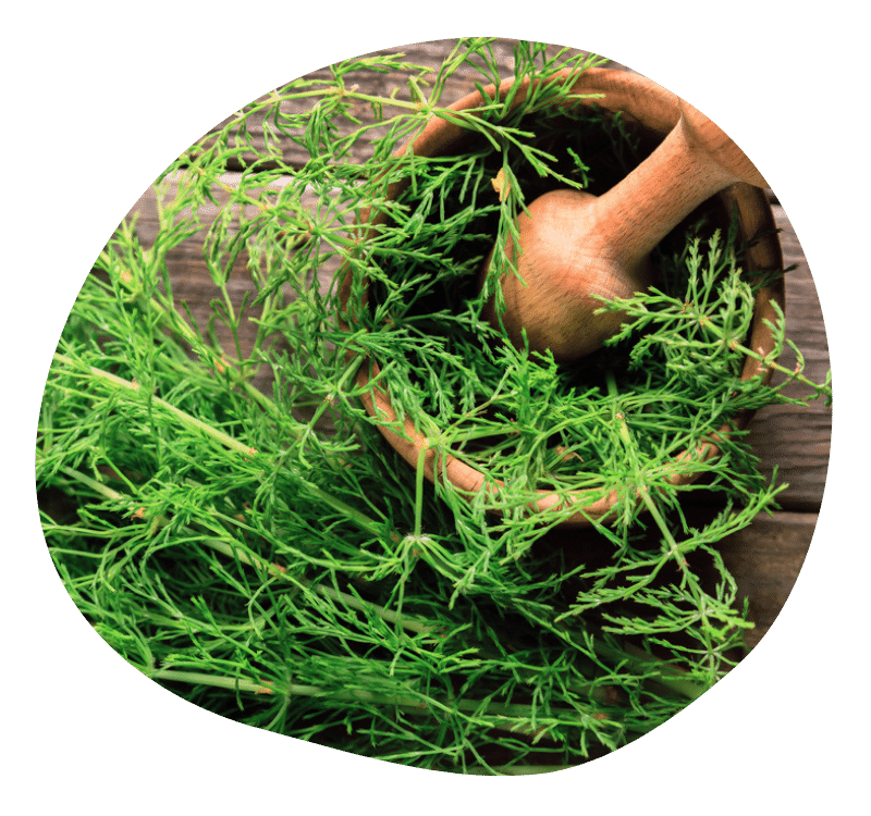 Biovancia Santé - Bulle Actif Prele