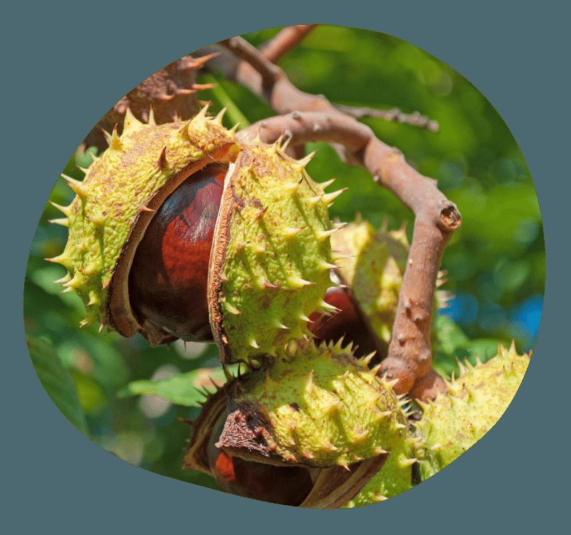 Biovancia Santé - Bulle Actif Marron Inde
